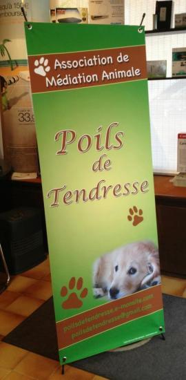 Poils de tendresse , médiation animale Région paca